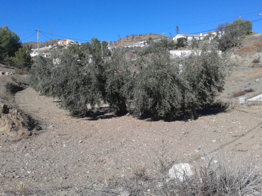 Almeria Land For sale 0 €
