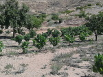 CDT0166: Cortijo for sale in Uleila del Campo